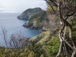 Cape Brett view