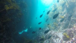 Diving Great Barrier Island