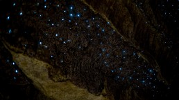 Waipu cave glow worms