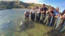 Tatapouri Reef Ecology Tour