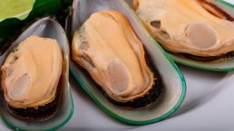 Green lipped mussels - Photo: Bigstock.com / AndreySt